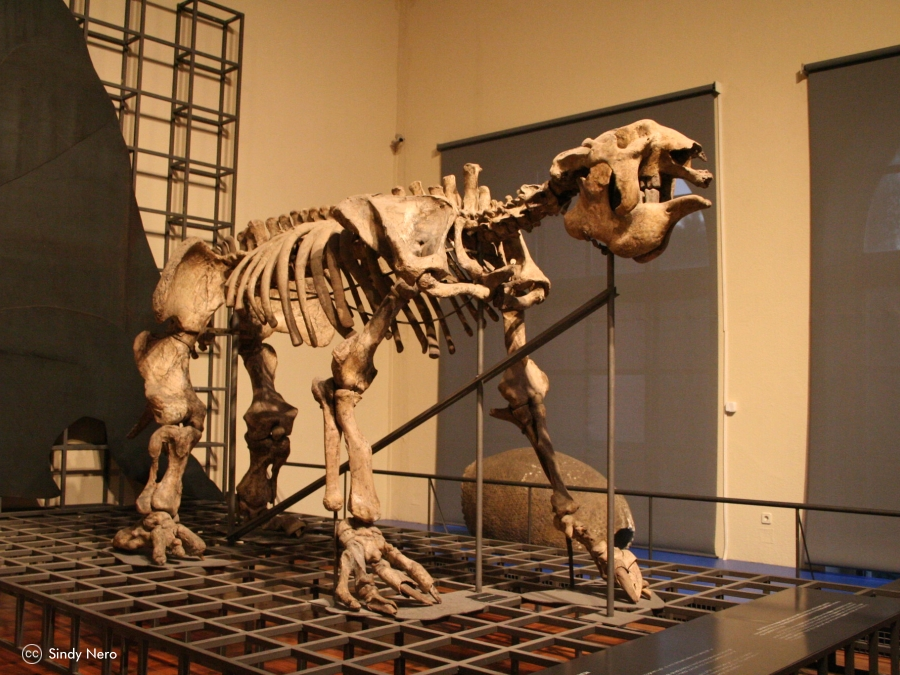 Museo de Ciencias Naturales - Visita a Museos de Madrid